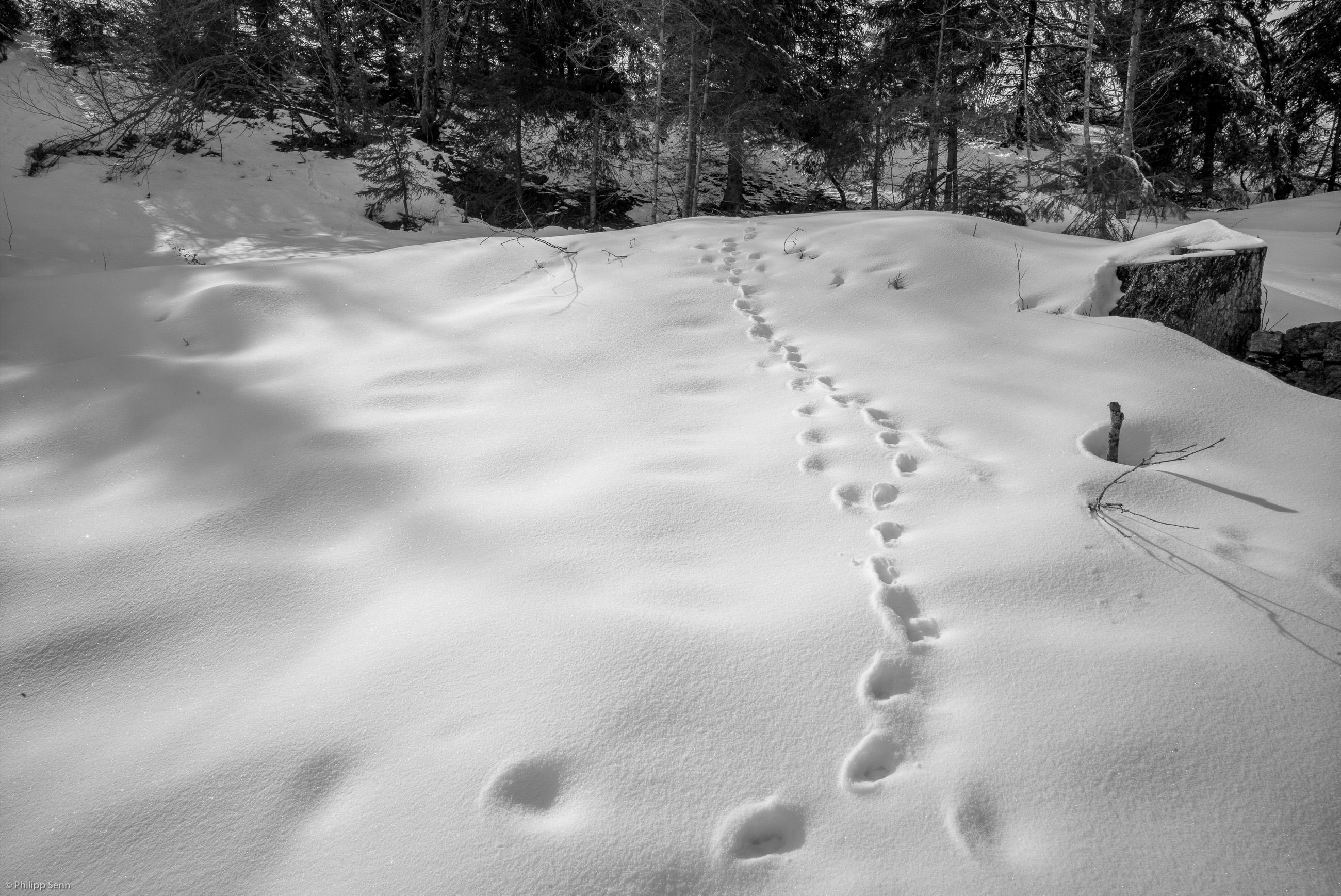 © Philipp Senn. Schwarzwald. Halde. Spuren im Schnee - nicht von Patricia St. John...